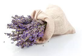 Lavendel TEST